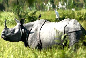 Kaziranga National Park | Kaziranga Wildlife Sanctuary, Assam, India