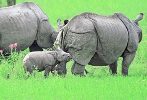 essay on kaziranga national park of assam