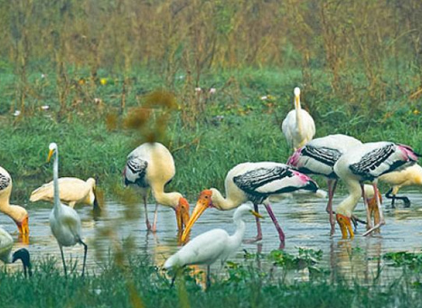 Keoladeo Ghana National Park Bharatpur
