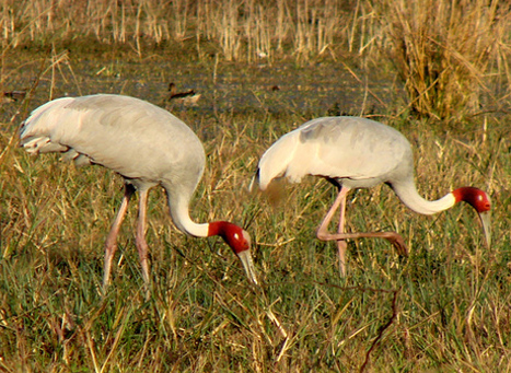 Keoladeo Ghana National Park, Bharatpur