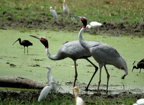 Keoladeo Ghana National Park Rajasthan