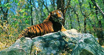 Kerala Cultural Holidays and Wildlife
