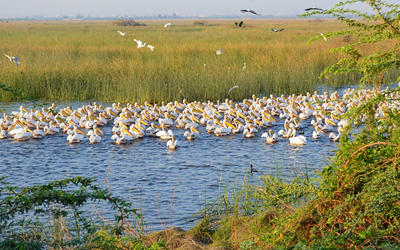 Khijadiya Bird Sanctuary Jamnagar