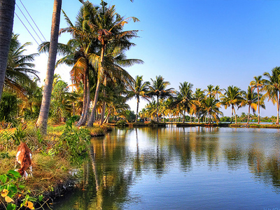Kumbalangi Integrated Tourism Village Kochi Kerala