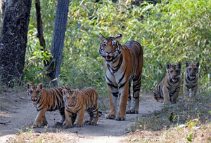 Madhav National Park