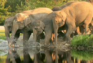 Mudumalai National Park Wildlife Sanctuary In Tamil Nadu