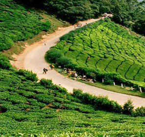 Magical Kerala Tour Package