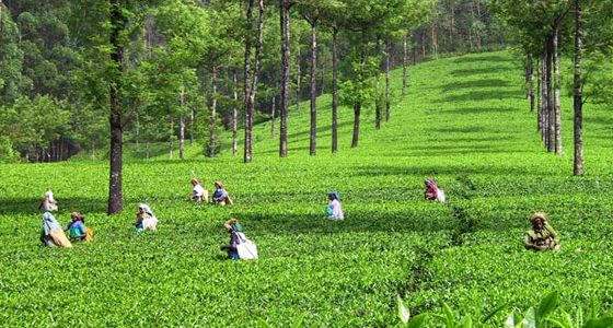 cochin munnar weekend tour