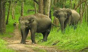 Nagrhole National Park