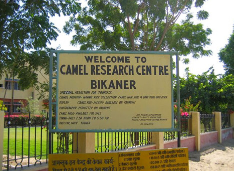 National Research Centre on Camel, Bikaner