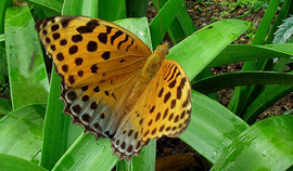 Butterfly Tour of North-East India