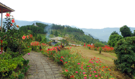 North-East India Flower Tour
