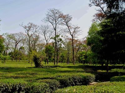 Tea Gardens Palampur
