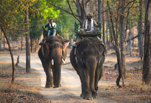 Panna National Park Panna Tiger Reserve Madhya Pradesh