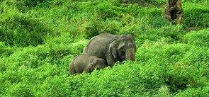 Parambikulam, Kerala