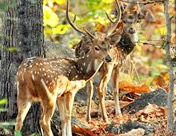 Pench National Park, Madhya Pradesh