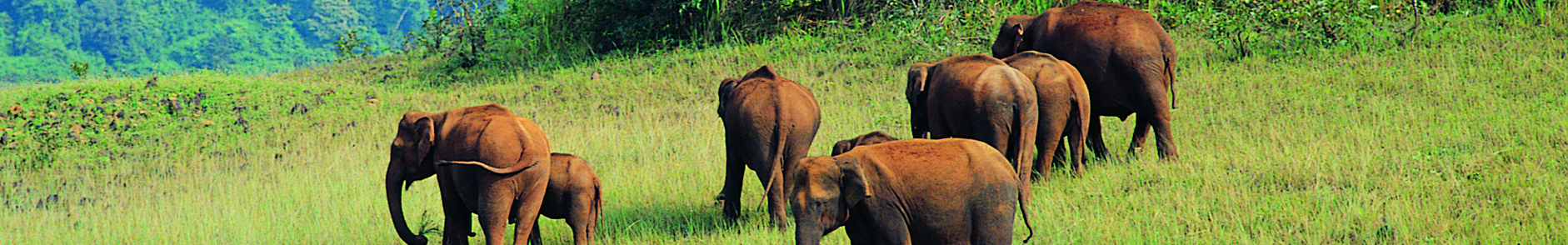 how to visit periyar wildlife sanctuary