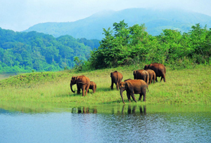 Periyar National Park, Thekkady