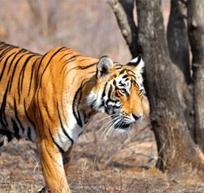 Tadoba Tour from Nagpur
