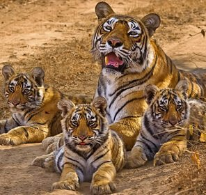 Tadoba Tour with Nagzira National Park