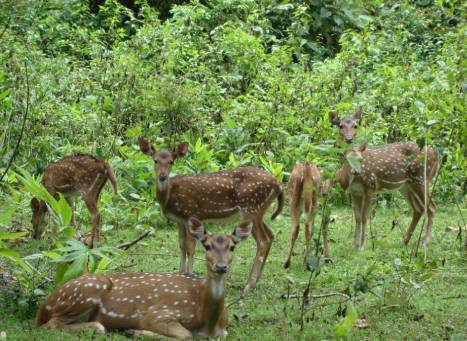 Sagareshwar Wildlife Sanctuary Maharashtra