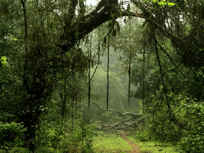 Silent Valley National Park, Kerala