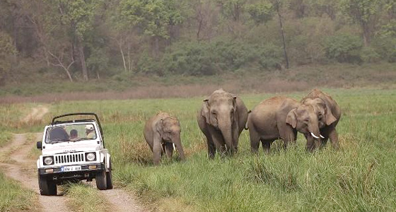 Jeep Safari at Corbett