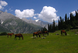 hill station of sonamarg
