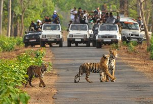 Tadoba Nagzira and Pench National Park Tour