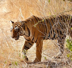 Wildlife Tour Packages Rajasthan