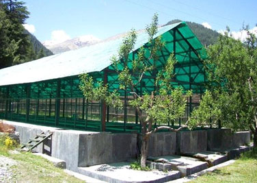Trout Farm Sangla
