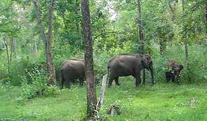 Wayanad National Park