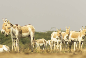 Wildlife Tours in Gujarat