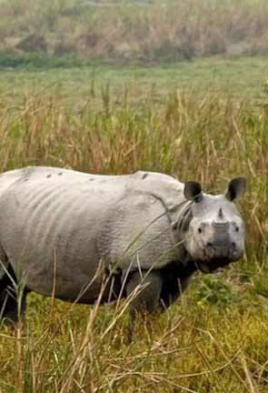 Assam Wildlife
