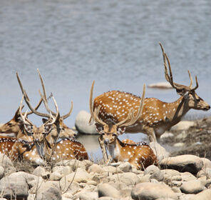 Ganges Tour with Jim Corbett National Park