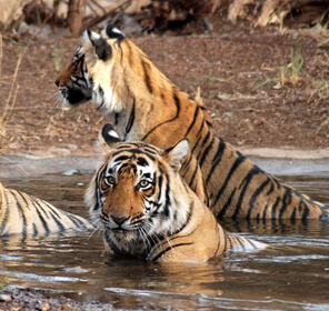 Jim Corbett Weekend Tour