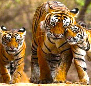 Jim Corbett Tour with Golden Triangle India
