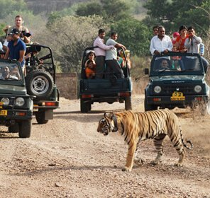 Tiger Safari Expedition India