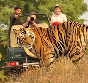 Corbett Wildlife Tour Package