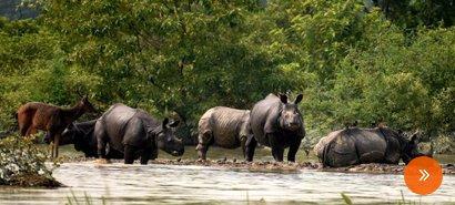 define wildlife tourism