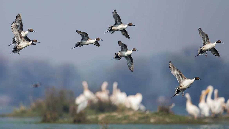 Bharatpur Bird Sanctuary   Keoladeo National Park, Rajasthan