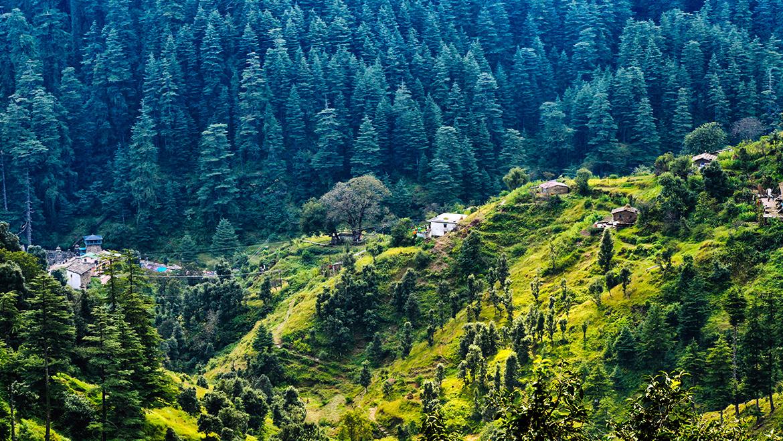Ranikhet Tourism - Best Travel Guide to Visit Ranikhet   Ranikhet Tour