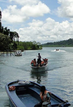 Mangrove Creek Safari in Andaman