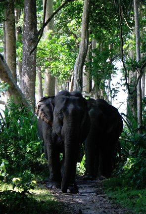 Andaman Wildlife Tourism