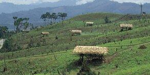 Arunachal Pradesh Aalo