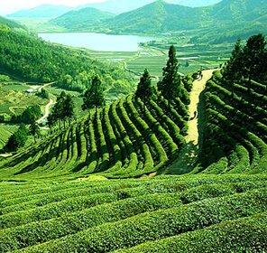 Assam & Arunachal Pradesh