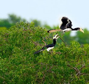 Birding in Namdapha
