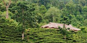 Arunachal Pradesh Nampong