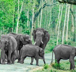 Assam & Arunachal Wildlife Tour