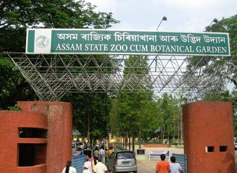 Image result for Guwahati Zoo